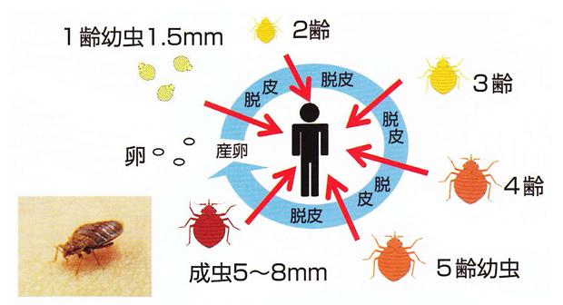 トコジラミ(南京虫)駆除・予防用エアゾール剤 「エヤローチA」説明